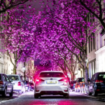 W Japonii wiosna, zakwitły wiśnie