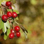 Idzie jesień – zadbaj o swoją odporność