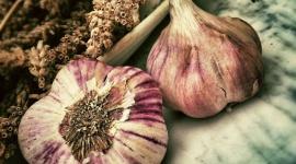 Czosnek – naturalny antybiotyk BIZNES, Media i PR - Na pewno każdy słyszał o tym, że czosnek jest jedną z najlepszych i najskuteczniejszych na świecie roślin leczniczych. Mimo, że jego specyficzny zapach i smak nie wszystkim odpowiada, nie można zapominać o jego licznych, cennych właściwości.